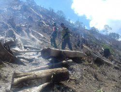 """""""Kebakaran Hebat Hanguskan 15 Hektar, Hutan di Aceh Tengah Terancam Punah"""
