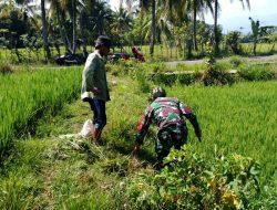 Meski Terik Matahari Begitu Menyengat, Babinsa TNI ini Tidak Kenal Lelah Dampingi Petani