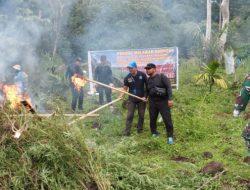 BNNP Aceh Musnahkan 3,5 Hektar Ladang Ganja di Lamteuba Aceh Besar